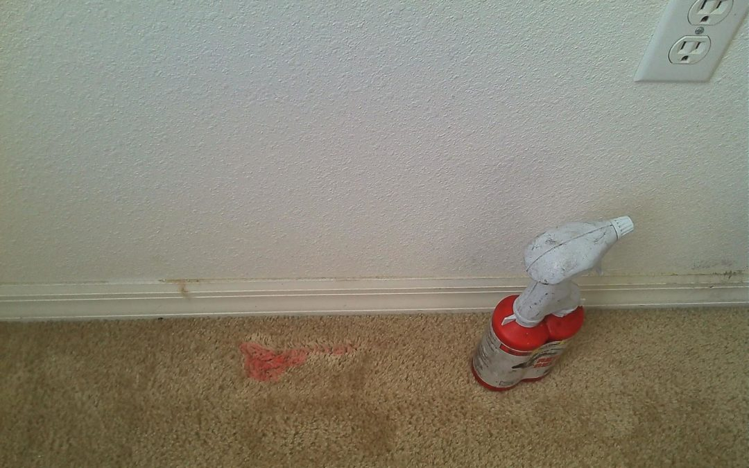 DIY: Paint Spill on Carpet